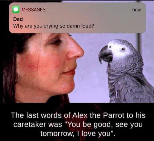 Alex-was-a-good-boy.jpg